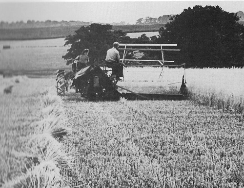 Harvest, Potter's Hill Farm, 1948.