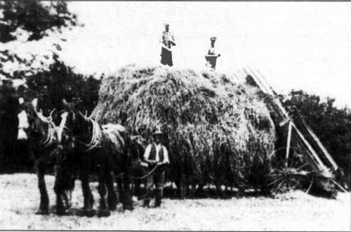 Haymaking in the early thirties